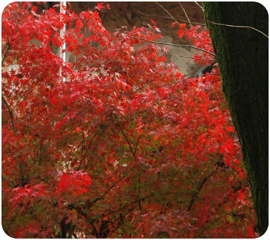 leaves_01