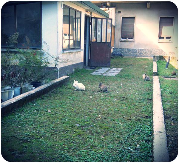 giardino_4