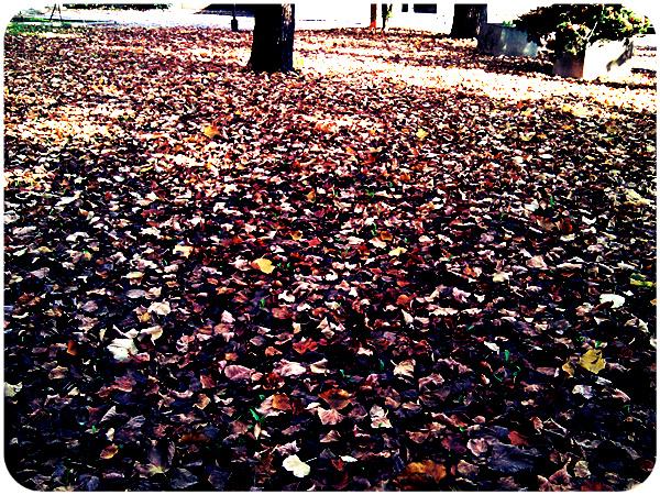 autumn_72